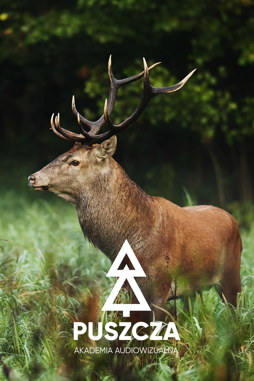 jeleń logo akademia puszcza